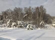 Участок у леса, СНТ Малиновка 8 соток, Чеховский район
