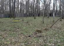 Участок с лесными деревьями 30 соток в деревне Климовка, Чеховский район