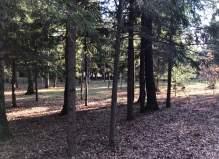Земельный участок в Чеховском районе, деревня Поспелиха, 10 соток